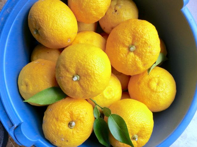 丹羽SODの成分の元となっているゆず果汁